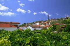 Vides de uva en Grecia Imagen de archivo libre de regalías