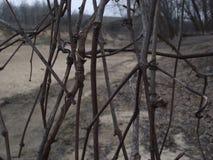 Vides del invierno Imagen de archivo