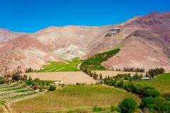 Vides del valle de Elqui Fotografía de archivo libre de regalías