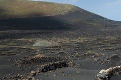 Vides en paisaje protegido Geria del La foto de archivo libre de regalías