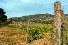 Vides en Toscana Foto de archivo libre de regalías