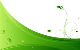 Vides verdes Imagen de archivo