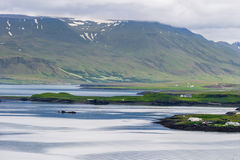 Videy Island Iceland Royalty Free Stock Photos