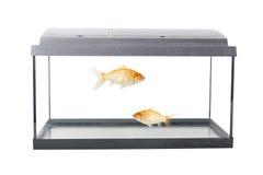 Videz l'aquarium carré Image stock