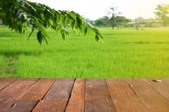 Videz l'endroit en bois de table de l'espace libre avec le gisement de feuille et de riz Photos libres de droits