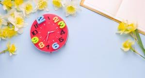 Videz la tasse ouverte de carnet de jonquilles rouges de jaune d'horloge de thé sur le fond bleu-clair Bureau fonctionnant de fem Image libre de droits