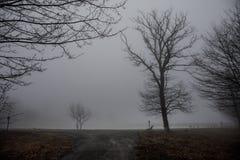 Videz le banc au parc près de l'étang par jour brumeux, scène froide minimalistic de saison banc au lac dans le brouillard dans l Photographie stock libre de droits