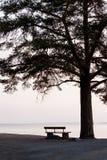 Videz le banc et la grande silhouette d'arbre photographie stock libre de droits