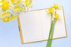 Videz le carnet ouvert avec les jonquilles jaunes sur le fond bleu-clair Configuration d'appartement de vue supérieure Photo libre de droits
