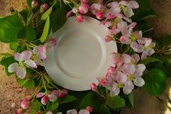 Videz le plat blanc avec des branches de fleur de ressort de dessus de pommier Images libres de droits
