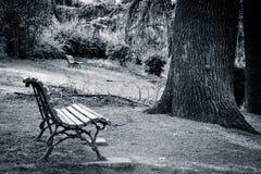 Videz les bancs en parc Images libres de droits