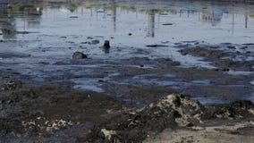 Videz les déchets toxiques, l'eau de contamination de lagune d'huile et le sol image libre de droits