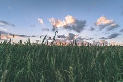 videz les prés colorés dans la campagne avec des fleurs dans le premier plan photos stock