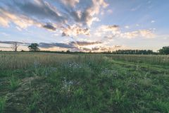 videz les prés colorés dans la campagne avec des fleurs dans le premier plan images libres de droits