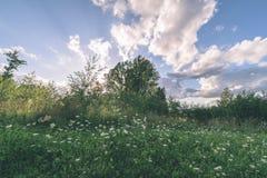 videz les prés colorés dans la campagne avec des fleurs dans le premier plan photos libres de droits