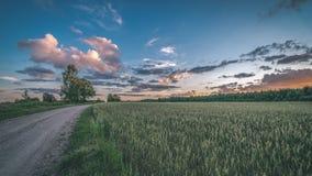 videz les prés colorés dans la campagne avec des fleurs dans le premier plan photo stock
