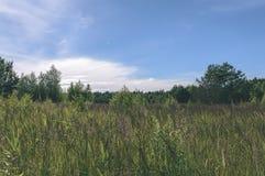 videz les prés colorés dans la campagne avec des fleurs dans le premier plan photographie stock