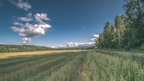 videz les prés colorés dans la campagne avec des fleurs dans le premier plan image libre de droits