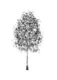 vidoeiro Árvore do desenho no fundo branco ilustração do vetor