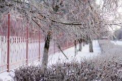 Vidoeiro e um número de arbustos cobertos com o esmalte gelado fotografia de stock royalty free