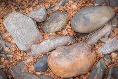 Vidoeiro Roos entre as rochas arredondadas do rio fotos de stock