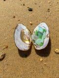 Vidrio colorido del mar en una cáscara del mejillón en orilla arenosa Fotografía de archivo libre de regalías