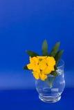 Vidrio con el Wallflower egeo (cheiri del Erysimum) Imágenes de archivo libres de regalías