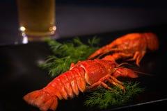 Vidrio con la cerveza y los cangrejos hervidos en una placa negra Fotografía de archivo libre de regalías