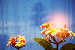 Vidrio con las flores en la estación de lluvias Fotografía de archivo