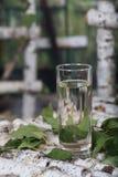 Vidrio de agua de la savia del abedul en un soporte de madera del árbol de abedul Imágenes de archivo libres de regalías