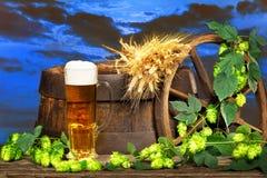 Vidrio de cerveza con los conos de la cebada y de salto Foto de archivo libre de regalías