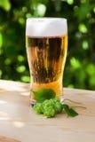 Vidrio de cerveza con los saltos en el sol de madera, jardín fotografía de archivo