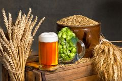 Vidrio de cerveza con los saltos y la cebada Imágenes de archivo libres de regalías