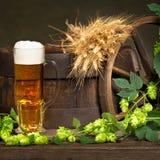 Vidrio de cerveza con los saltos y la cebada Fotografía de archivo libre de regalías