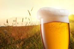 Vidrio de cerveza contra campo de trigo imagen de archivo