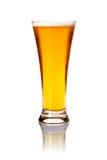 Vidrio de cerveza de cerveza dorada Imágenes de archivo libres de regalías