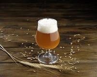 Vidrio de cerveza dorada con queso Imágenes de archivo libres de regalías