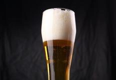 Vidrio de cerveza ligera Foto de archivo libre de regalías