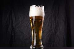 Vidrio de cerveza ligera Imagen de archivo libre de regalías