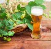 Vidrio de la cerveza, ramas de los puntos de los saltos, de la cebada y del trigo Fotos de archivo