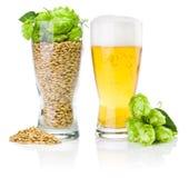Vidrio de la cerveza y de la taza por completo de cebada y de saltos Imágenes de archivo libres de regalías