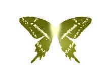 Vidrio de la mancha del color verde de la mariposa de las alas en el aislante blanco Stock de ilustración