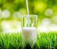 Vidrio de leche en fondo de la naturaleza Fotografía de archivo libre de regalías
