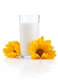 Vidrio de leche fresca y de dos flores amarillas Fotos de archivo