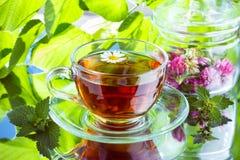 Vidrio de té herbario de la manzanilla Fotos de archivo libres de regalías