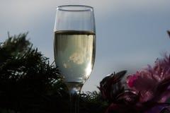 Vidrio de vino Imágenes de archivo libres de regalías