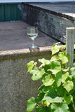 Vidrio de vino cerca de las hojas de la vid de uvas foto de archivo libre de regalías