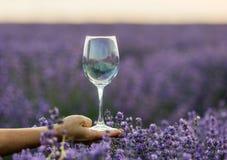 Vidrio de vino a disposición en un campo de la lavanda en la puesta del sol Fotografía de archivo
