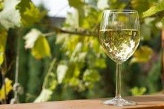 Vidrio de vino en jardín Imágenes de archivo libres de regalías