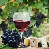 Vidrio de vino rojo con las uvas Fotografía de archivo